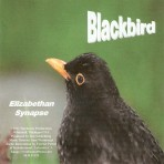 Blackbird – Elizabethan Synapse  [Sam Watmough, Music Director]
